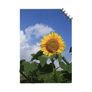 夏のヒマワリ Notes