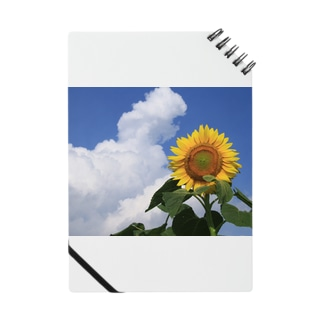 夏の風物詩 Notes
