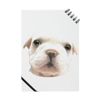 フレンチブルドッグA 子犬 ノート
