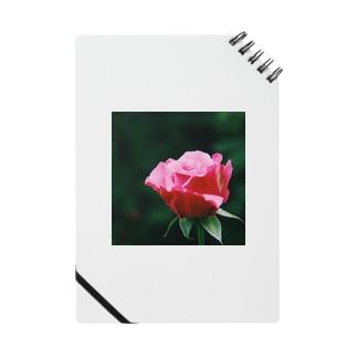 秋薔薇 Notes