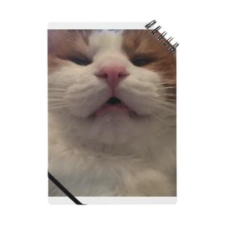 猫かお Notes