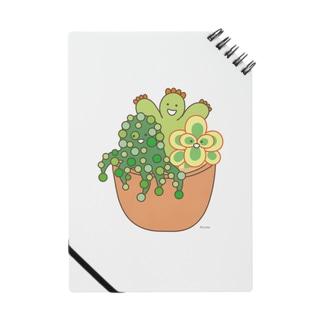 多肉植物たにくさん (テラコッタのプランターに集合) Notes