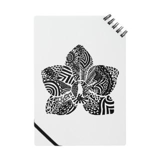 胡蝶蘭 Notes
