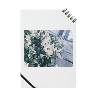 shiroi_hana Notes