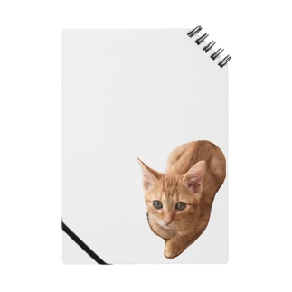 子猫のころも Notes