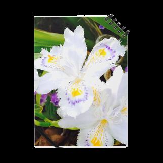 明白の花 Notes