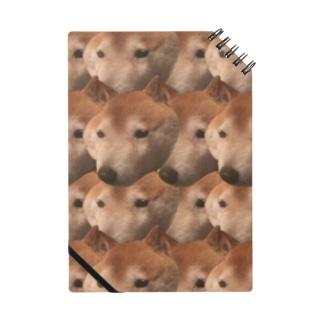 犬の顔 Notes