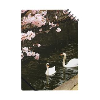 水上のお花見 Notes