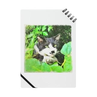 二枚目な猫 Notes