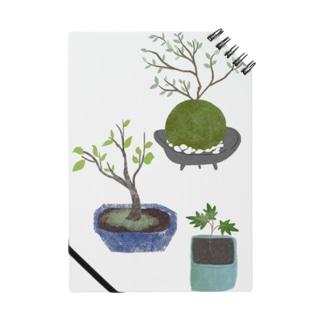 ボタニカル 鉢植えと苔玉 ノート