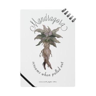 マンドラゴラ ノート
