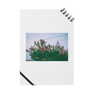 道ばたに咲く花 Notes