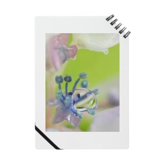 お花と雨粒 Notes