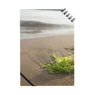 浜辺に打ち上げられた海藻 Notes