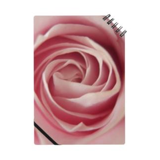 薔薇の底 Notes