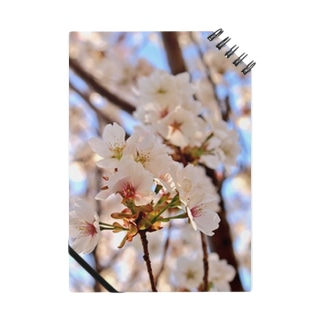 春を、持つ。 Notes