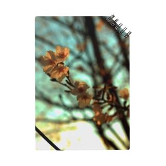 夕空と桜 Notes