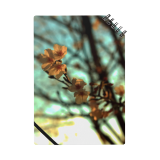 M.F.Photoの夕空と桜 ノート