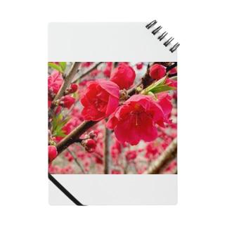 お花ノート Notes