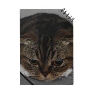 愛猫momocoのお願い Notes