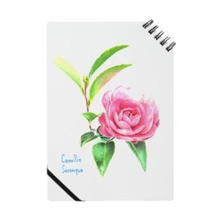camellia sasanqua Notes