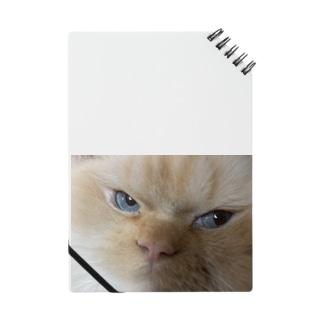 鋭い猫 Notes