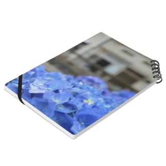 Hydrangea (blue) Notes
