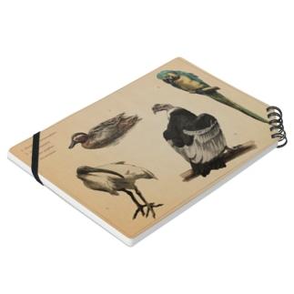鳥類画帳 ノート