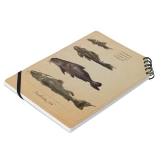 魚類画帳(淡水魚) ノート