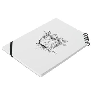 パキポディウム・ボタニカルアート(植物)  Notes