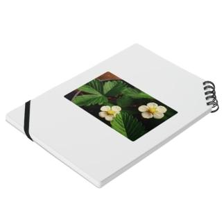 ワイルドストロベリーの花 Notes