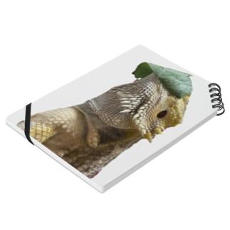 小松菜を被るフトアゴヒゲトカゲ Notes
