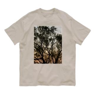 夕方の林の中で Organic Cotton T-shirts