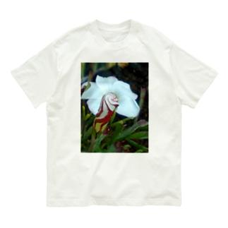 デザイナー Organic Cotton T-shirts