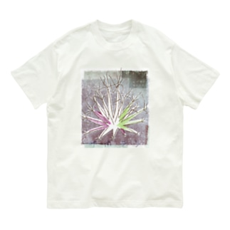 サボテン 晃山 Organic Cotton T-shirts