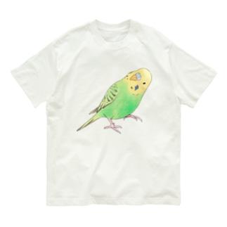 首傾げセキセイインコ ピーちゃん【まめるりはことり】 Organic Cotton T-shirts