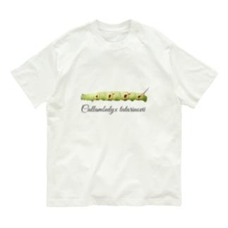 ウンモンスズメ幼虫と成虫 Organic Cotton T-shirts