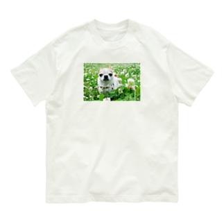 カラフルチワワ(クローバー) Organic Cotton T-shirts