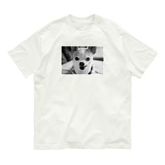モノクロチワワ(ぺろんちょ) Organic Cotton T-shirts