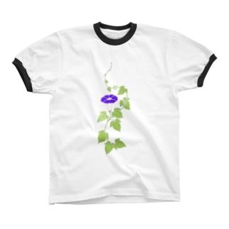 朝顔 リンガーTシャツ