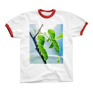 芋虫 リンガーTシャツ