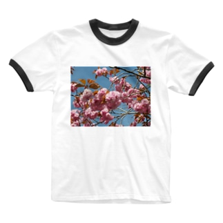 Cherry blossoms are close to Hanyu's monument 可憐な桜 Ringer T-shirts