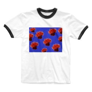 shimaの隠岐 ウメボシイソギンチャク Ringer T-shirts