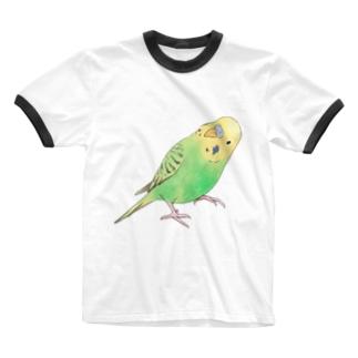 首傾げセキセイインコ ピーちゃん【まめるりはことり】 Ringer T-shirts