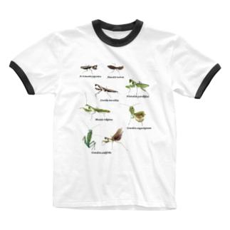 関東のカマキリ(背景白色ver) Ringer T-shirts