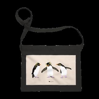 飛べない鳥のイワトビペンギン Sacoches