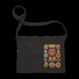 suess.のSea anemone Sacoches