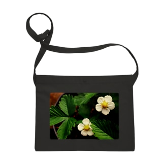 ワイルドストロベリーの花 Sacoches