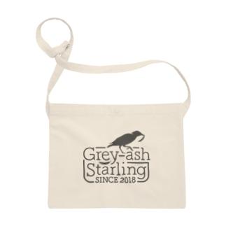 Grey-ash Starling Sacoches
