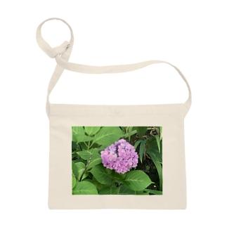 健気に咲き乱れる紫陽花 Sacoches